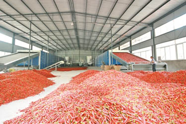 Red Pepper Drying Machine